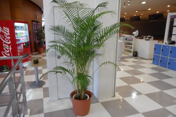 ボウリング場 観葉植物