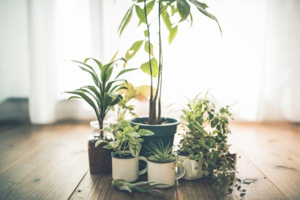 観葉植物が枯れる原因