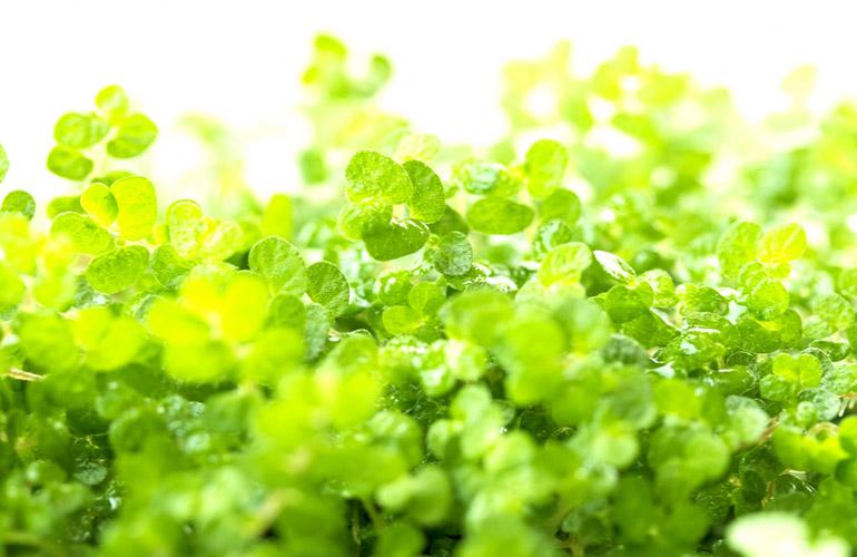 plant-image-04