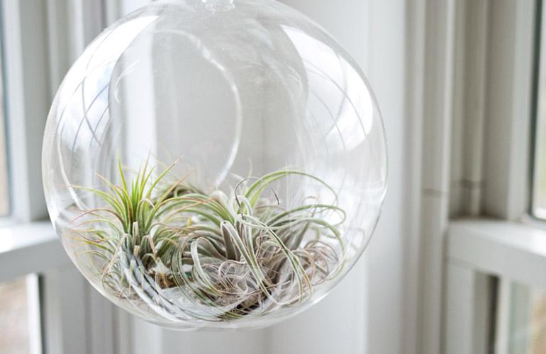 plant-image-06
