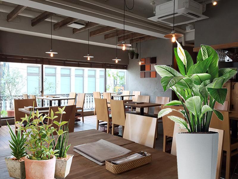 レストランの観葉植物レンタル事例