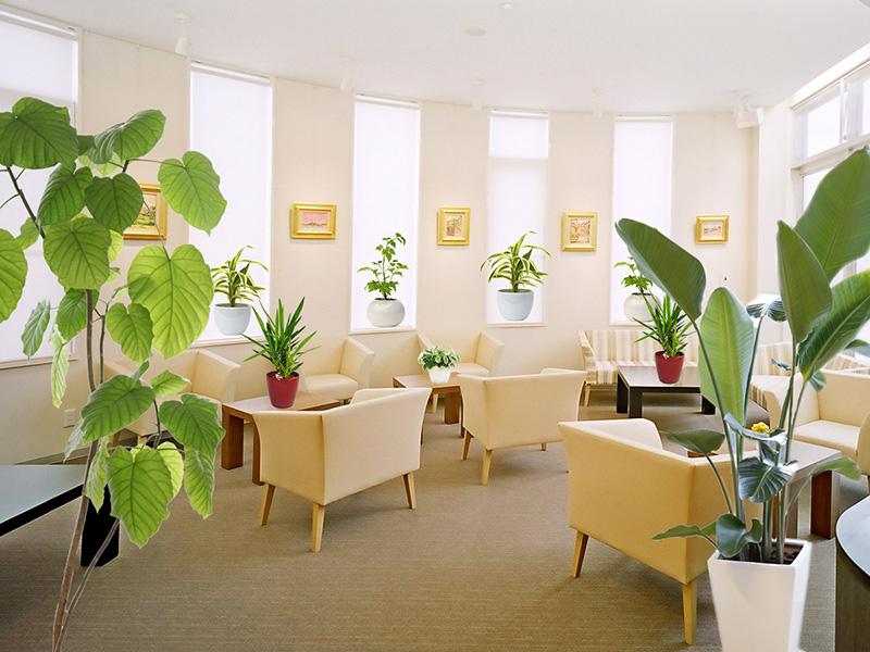 クリニックの観葉植物レンタル事例