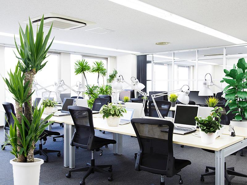オフィスの観葉植物レンタル事例