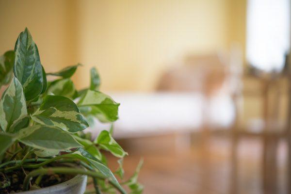 観葉植物のお役立ち情報