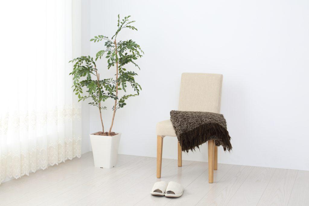 観葉植物の冬越し