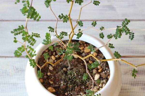 観葉植物 カビ対策
