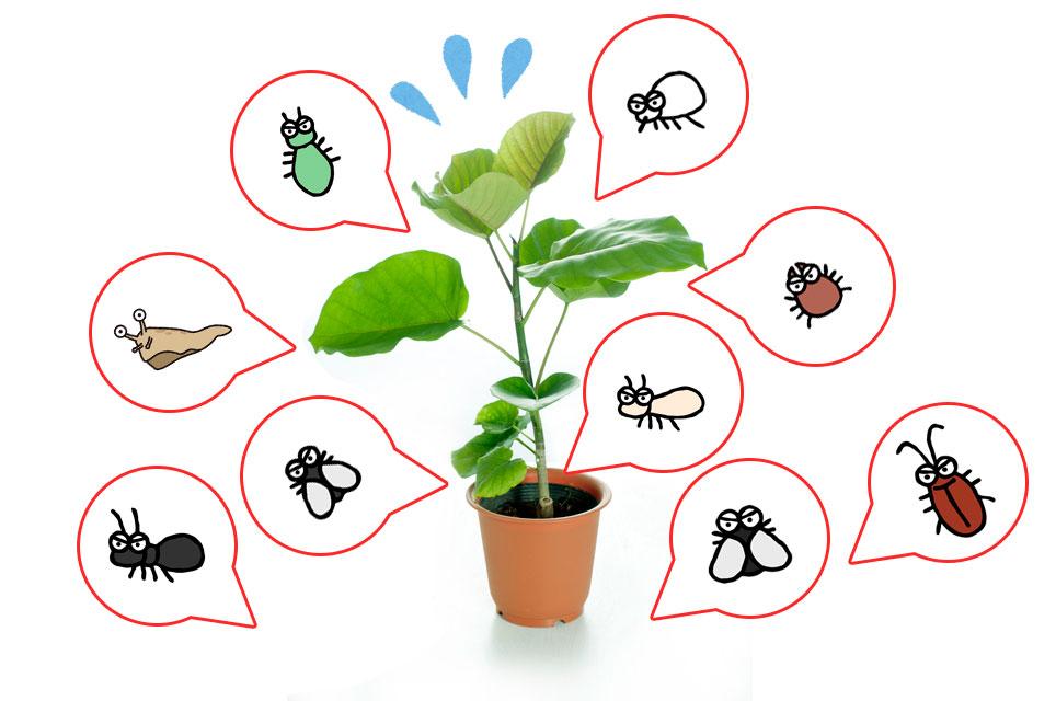 観葉植物の害虫対策