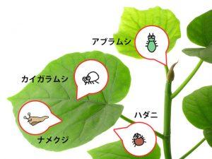 観葉植物を弱らせる害虫