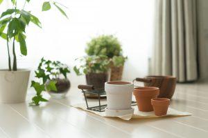 観葉植物の鉢の選び方