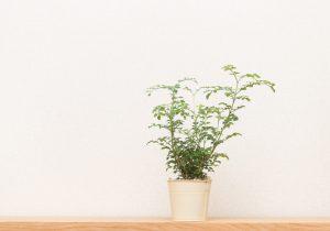 棚の上の観葉植物
