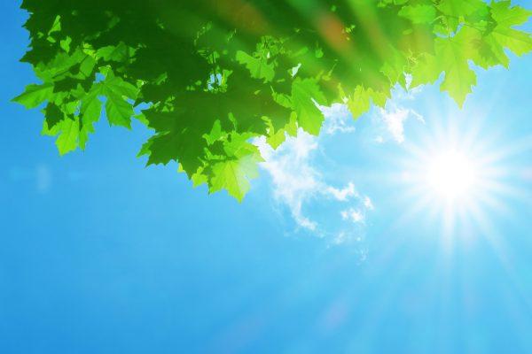 観葉植物の夏枯れ対策