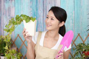 観葉植物を選ぶポイント