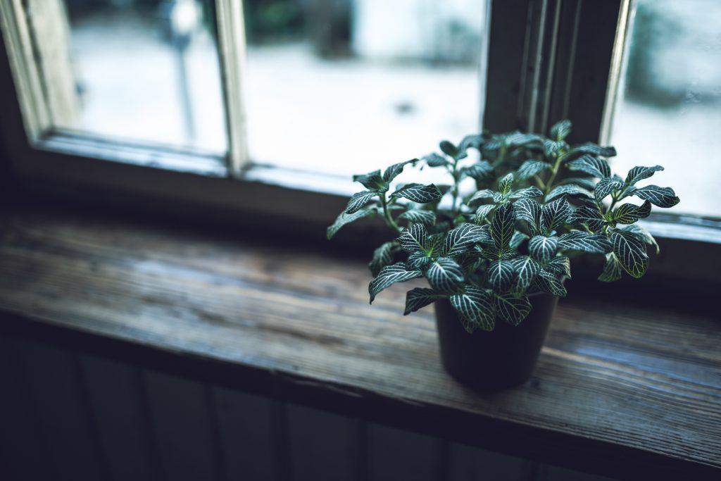 耐陰性のある観葉植物