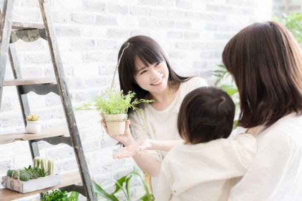 危険な観葉植物の注意点
