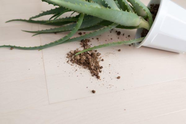 倒れた植物