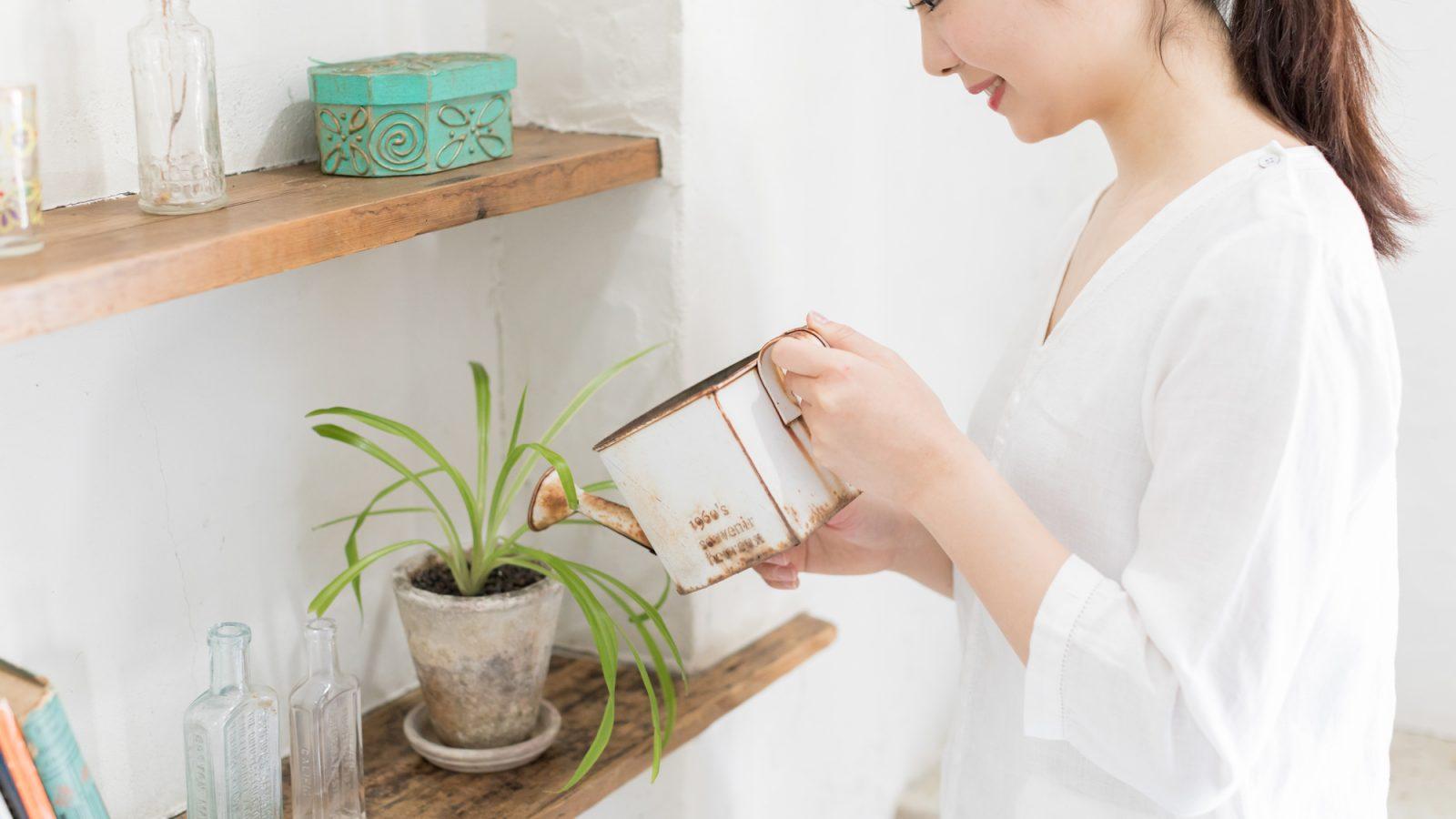 観葉植物の水やり