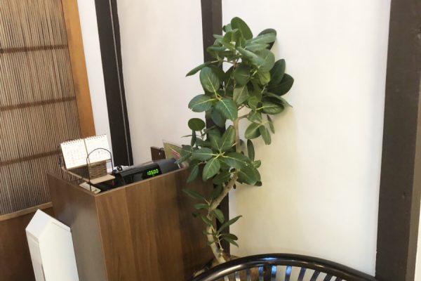 ペットサロンの観葉植物