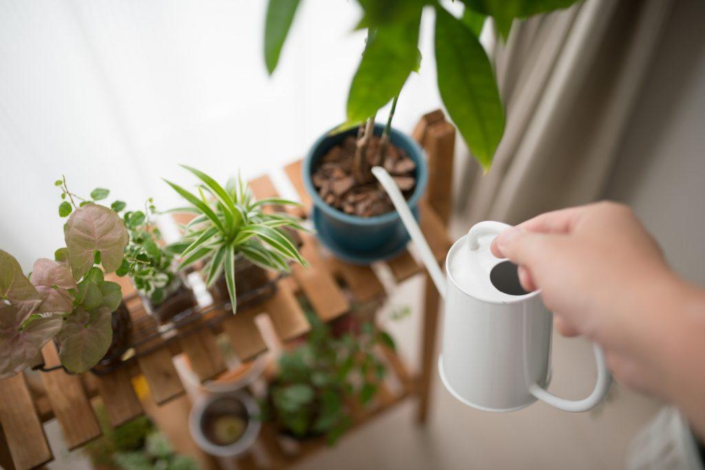 観葉植物の手入れ