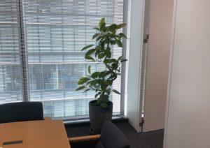 会議室のアルテシーマゴム