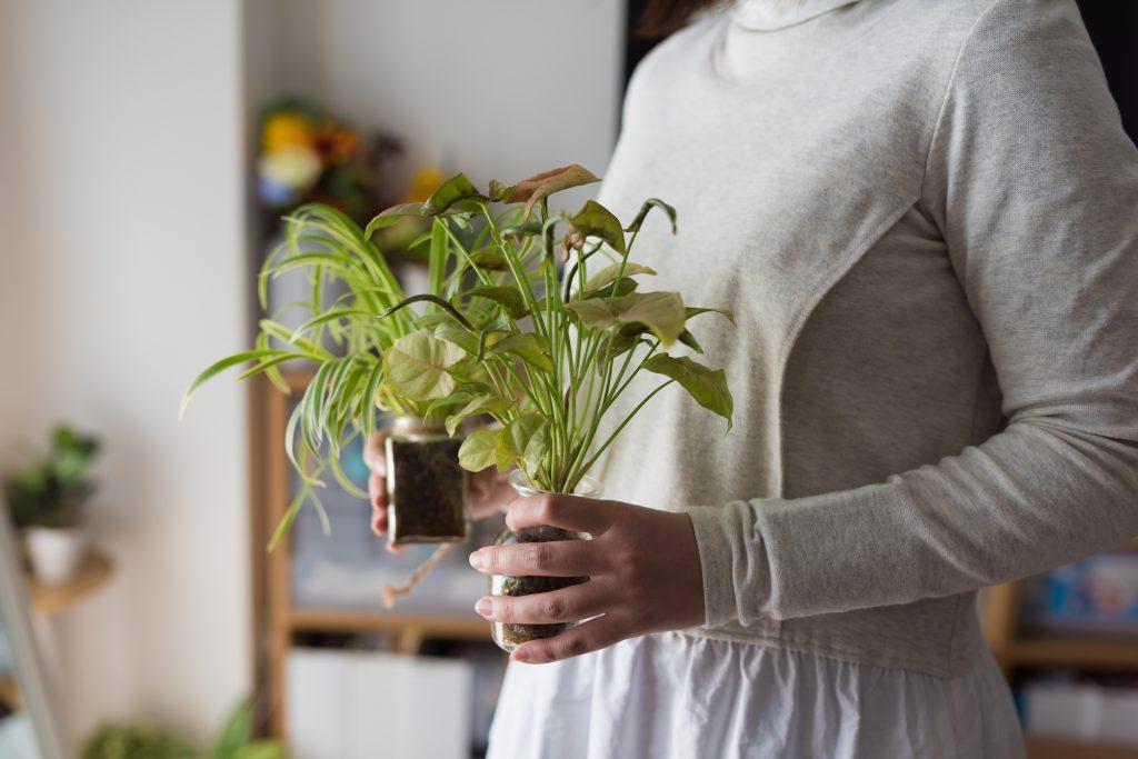 観葉植物の寿命