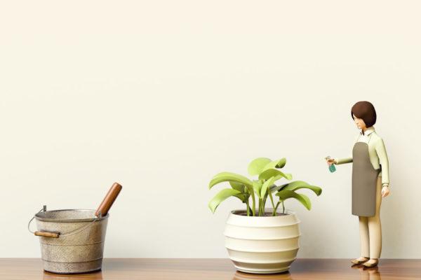 大きくならない観賞植物
