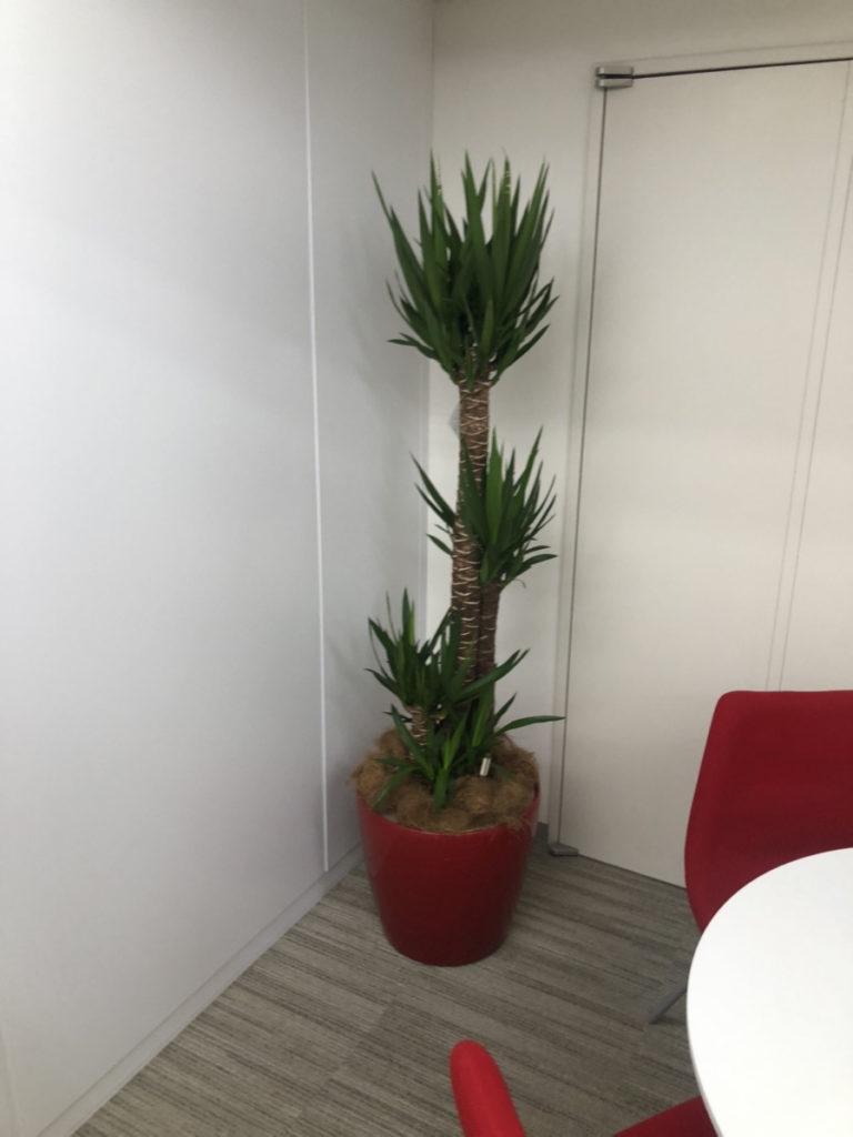 オフィスカーペットの汚れを隠すために観葉植物