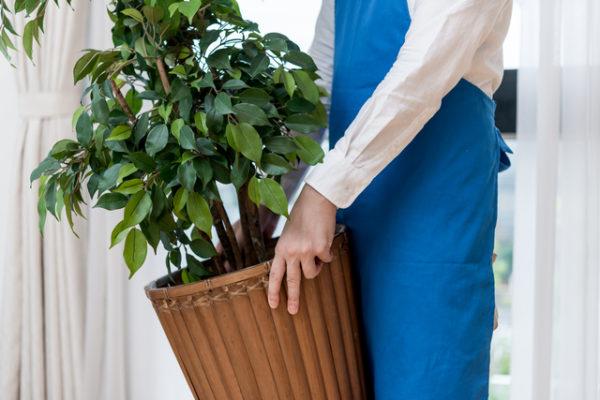 観葉植物レンタルサービス
