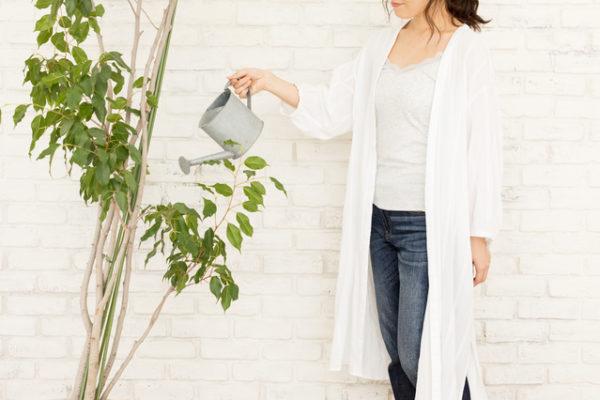 観葉植物 購入かレンタルか